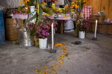 Camino creado con flor de Cempaxochitl para la llegada de los difuntos. Río Blanco Tonaltepec, Oaxaca 2018.